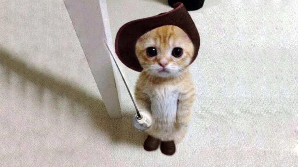 แมวให้โชค