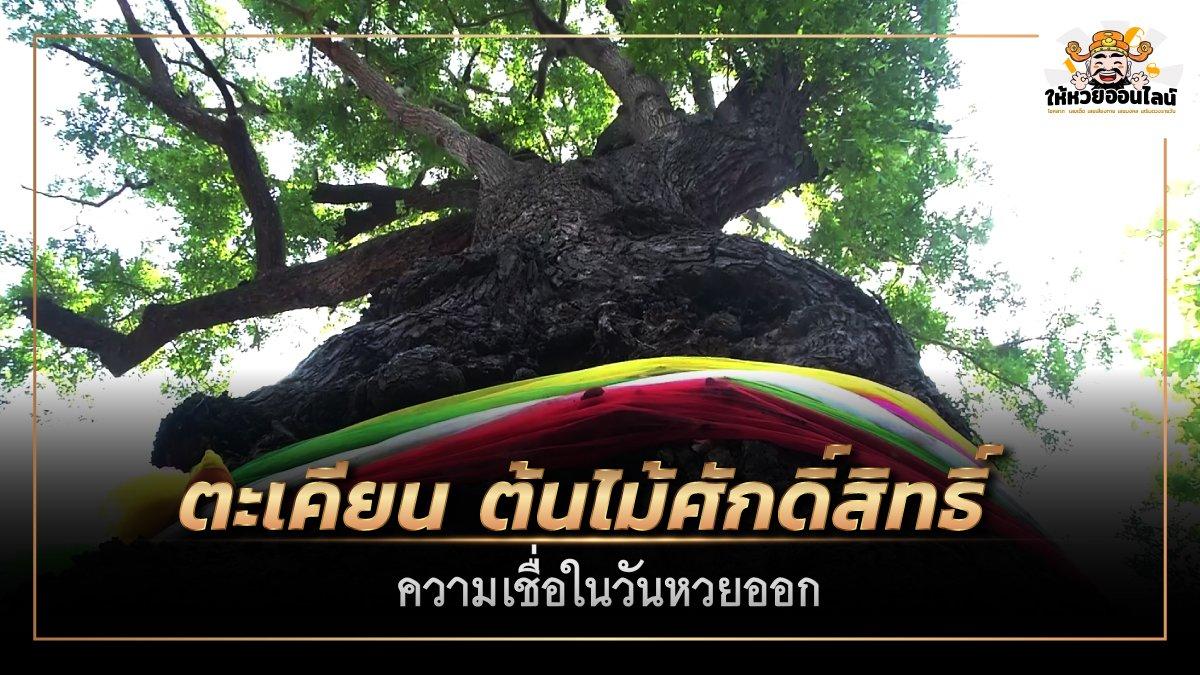feature-image_singlepost-เจ้าแม่ตะเคียน ต้นไม้ศักดิ์สิทธิ์ ความเชื่อในวันหวยออก