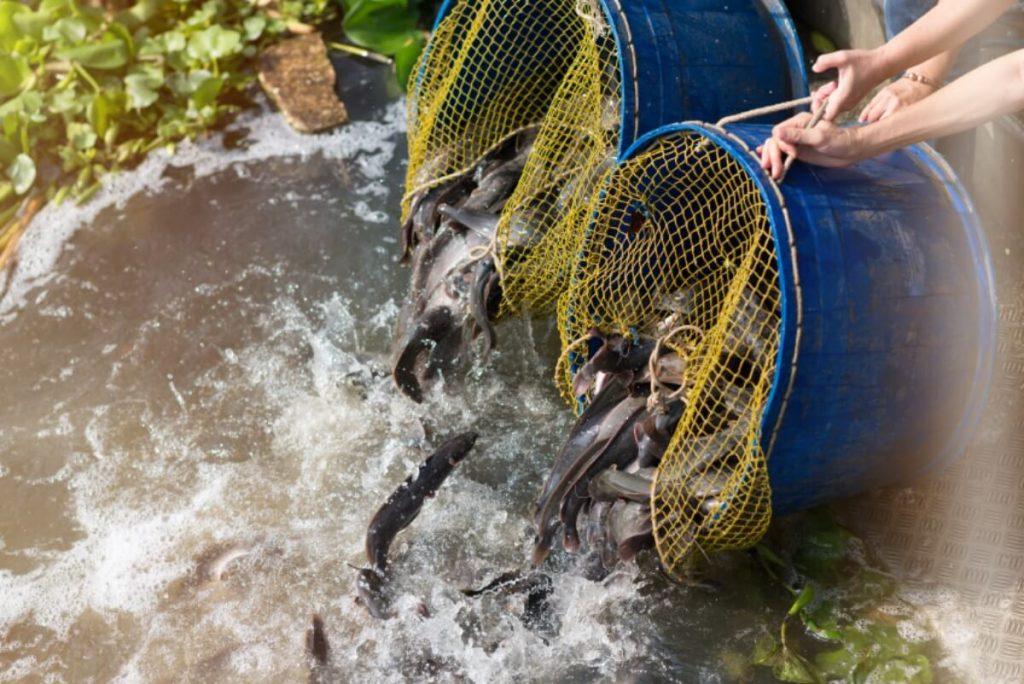 ทำบุญปล่อยสัตว์ ปล่อยปลา
