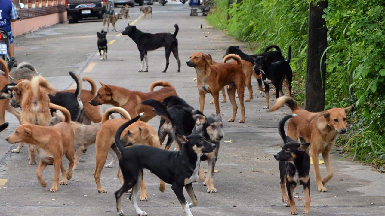 สุนัขจรจัดหลายตัวยืนอยู่บนถนน
