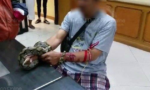 งูเหลือมรัดแขนผู้ชาย