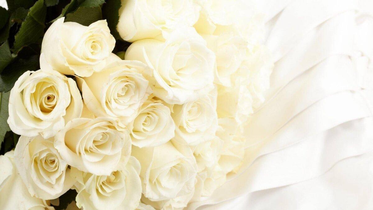 ดอกกุหลาบสีขาว