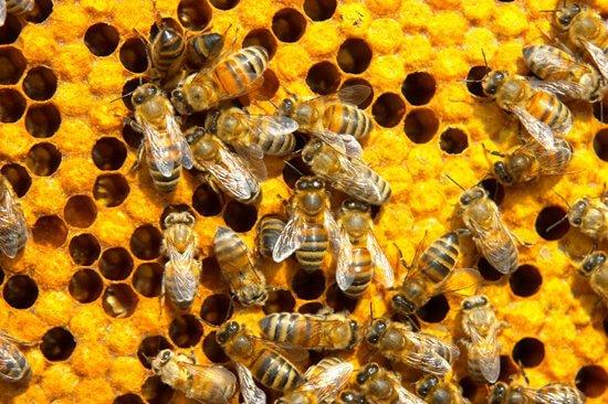 ผึ้งหลายตัวเกาะอยู่บนลังผึ้ง