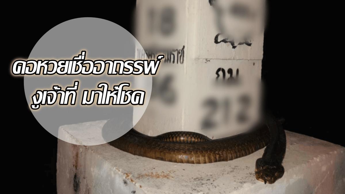 image-จงอางยักษ์ ตายคาหลักกิโล คอหวยเชื่ออาถรรพ์ งูเจ้าที่ มาให้โชค