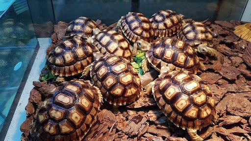 เต่าหลายตัว