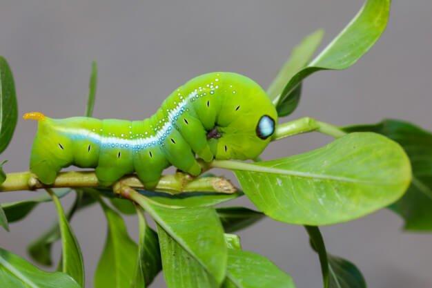 ฝันเห็นหนอน สีเขียว