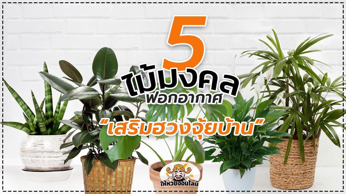 feature-image_singlepost-5 ไม้มงคล ช่วยฟอกอากาศ เสริมฮวงจุ้ยในบ้าน