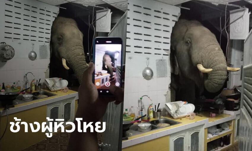 ช้างบุกบ้าน