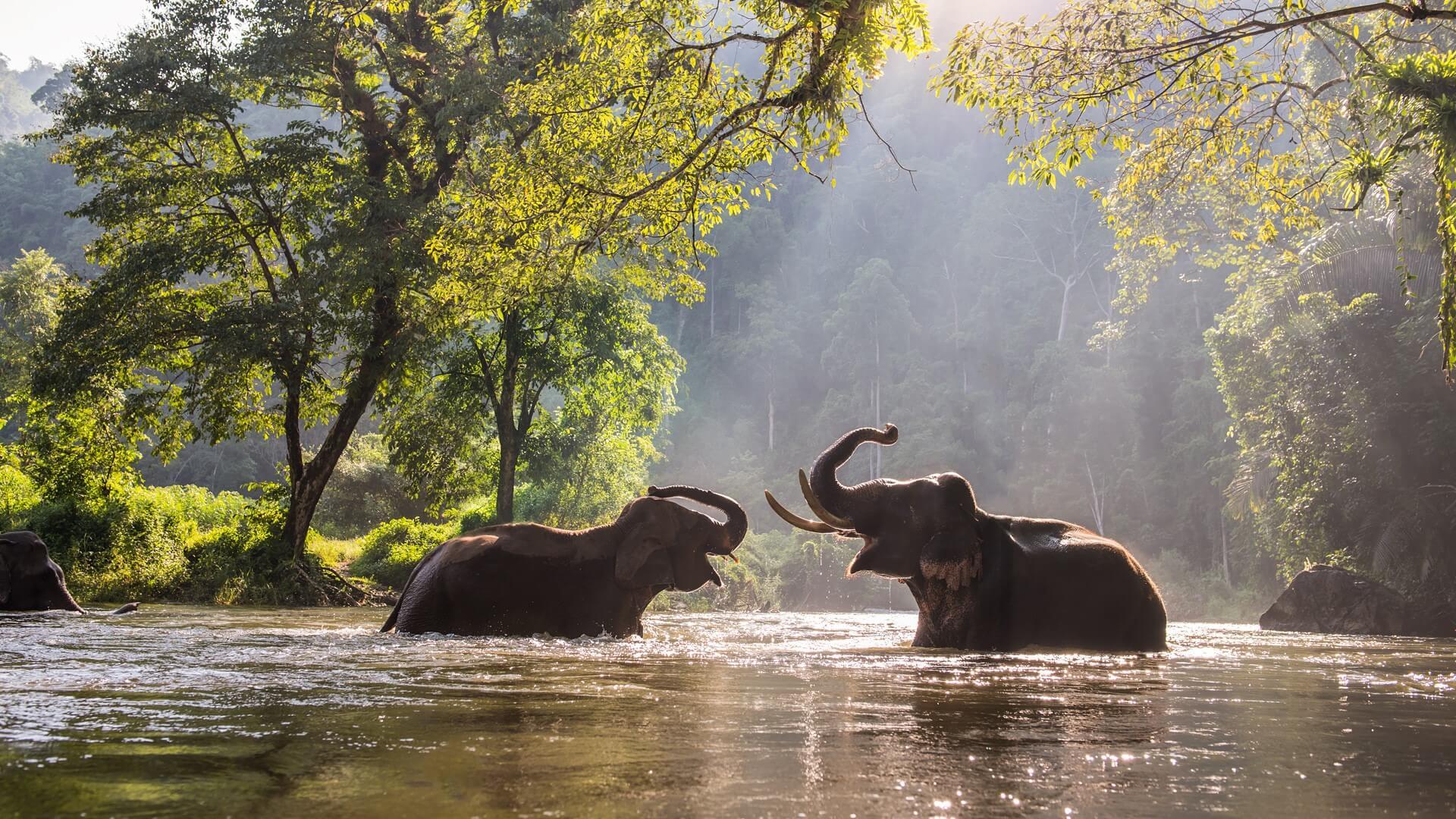 ช้างเล่นน้ำ