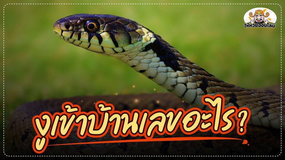 image-วิธีดูเลขจากเหตุการณ์ งูเข้าบ้านเลขอะไร