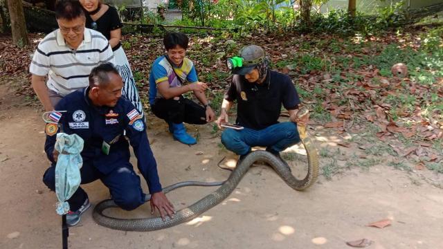 กู้ภัยจับงูเข้าบ้าน