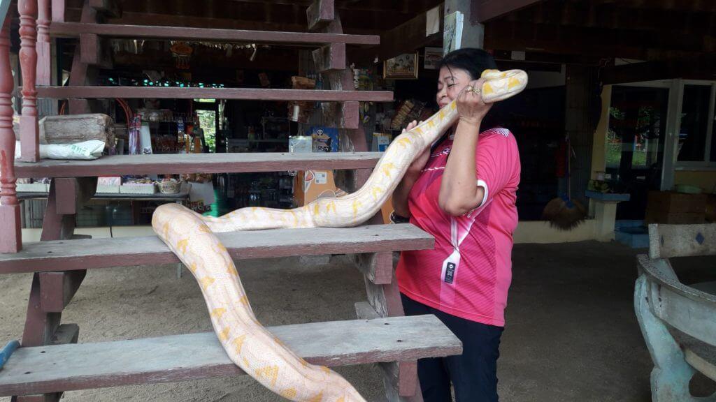 งูหลาม