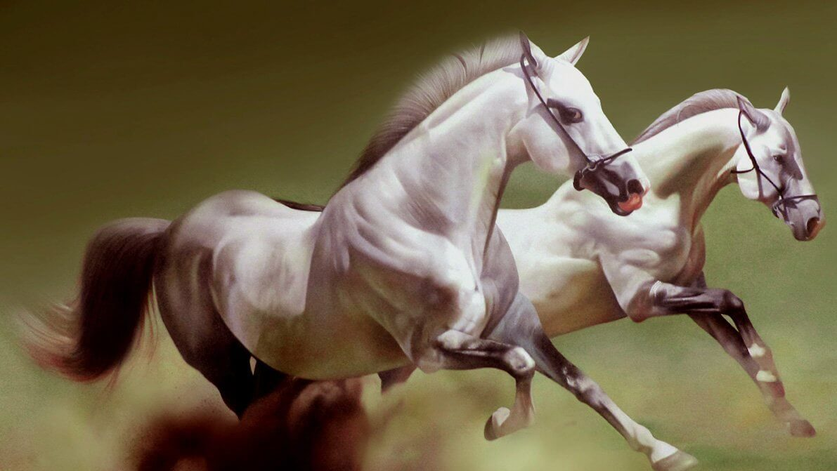 ม้าสองตัว