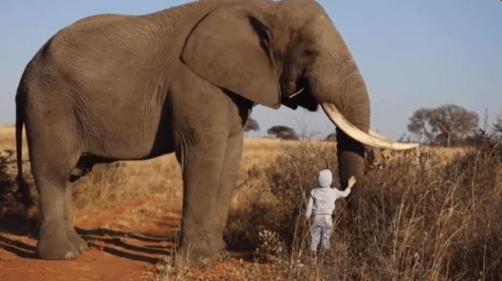 ช้างตัวใหญ่
