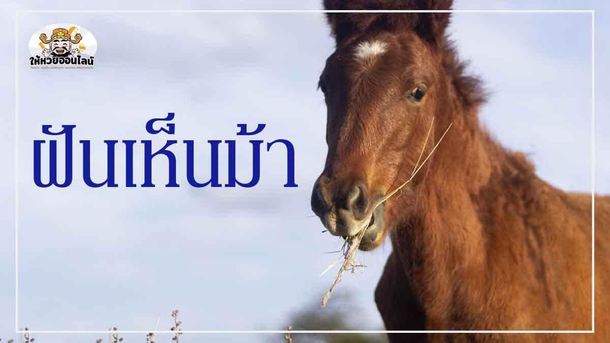 image-ฝันเห็นม้า เลขเด็ดและคำทำนายฝันงวดนี้