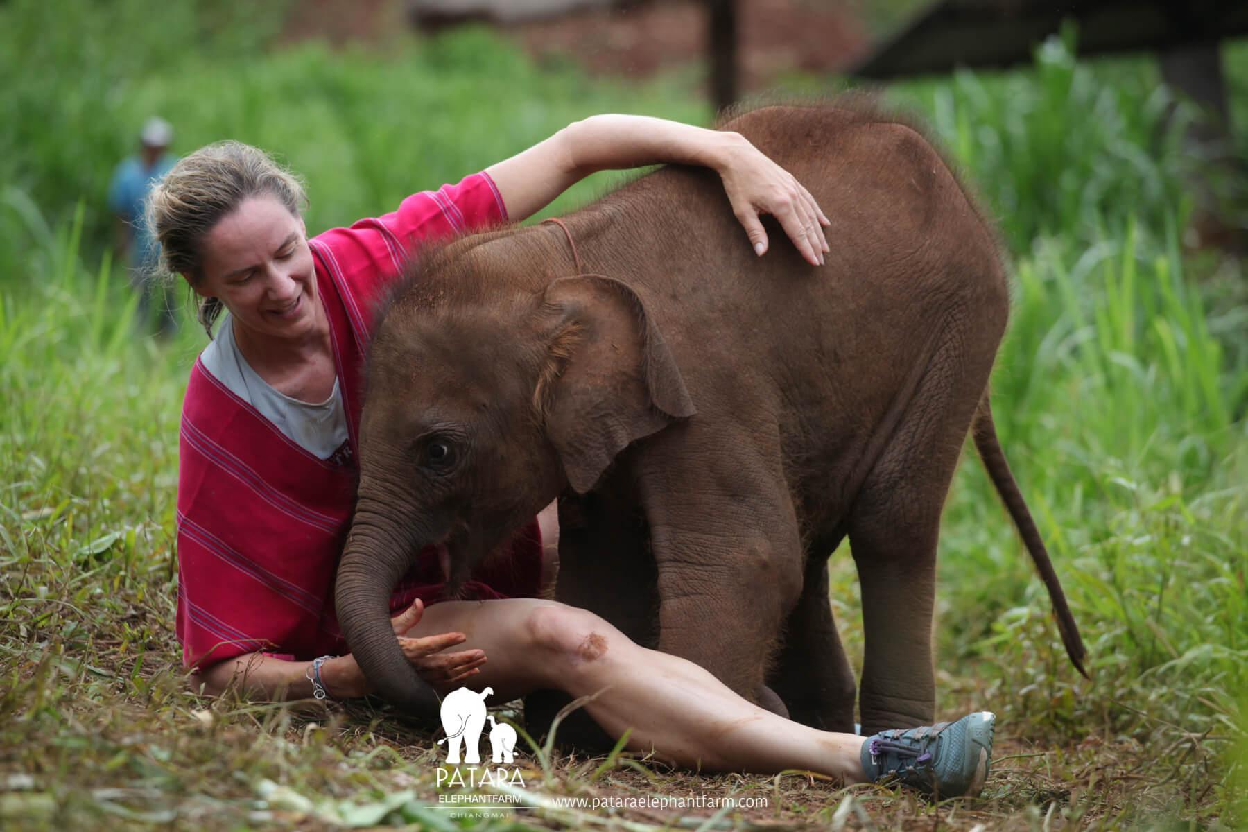 คนกอดช้าง