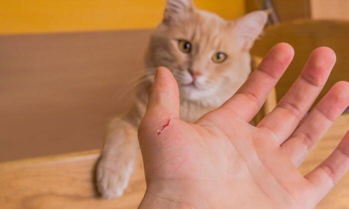 แมวกัดมือ