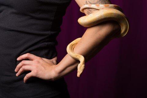 งูรัดแขน