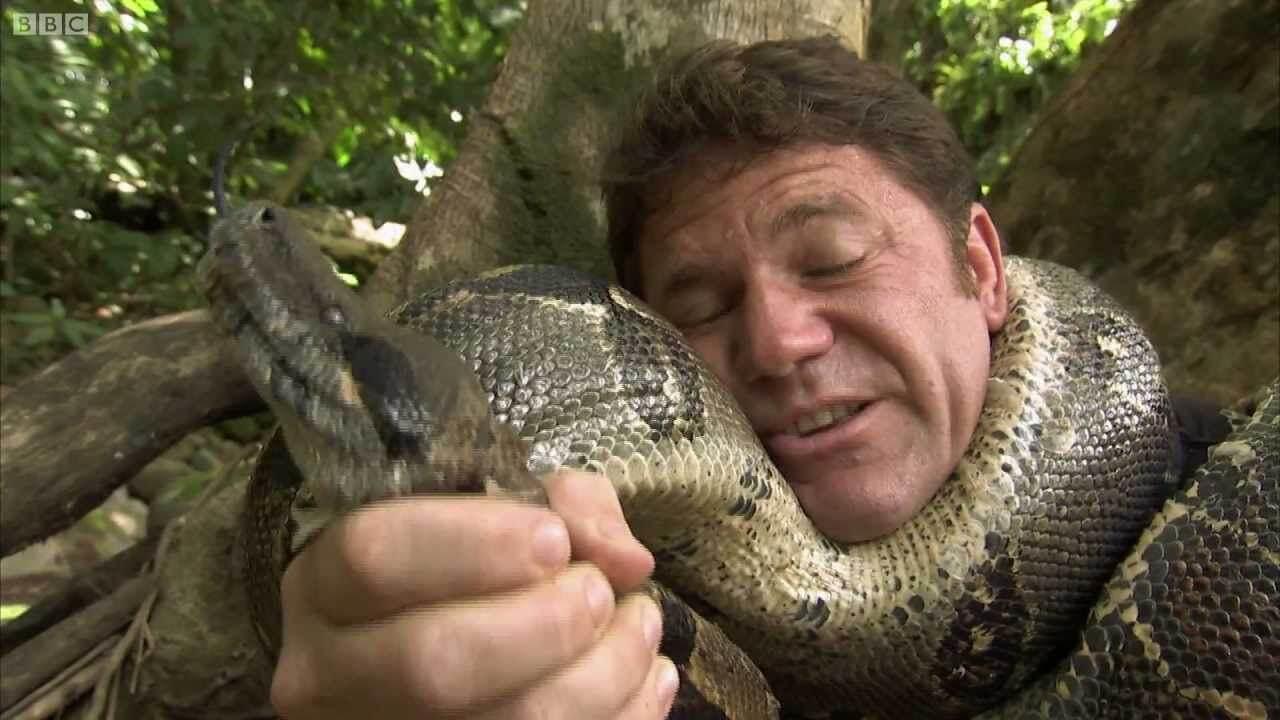 งูรัดคอคน