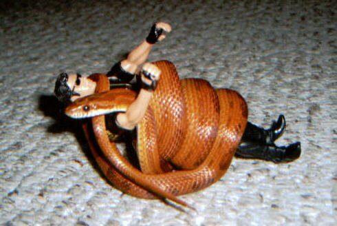 งูรัดของเล่น