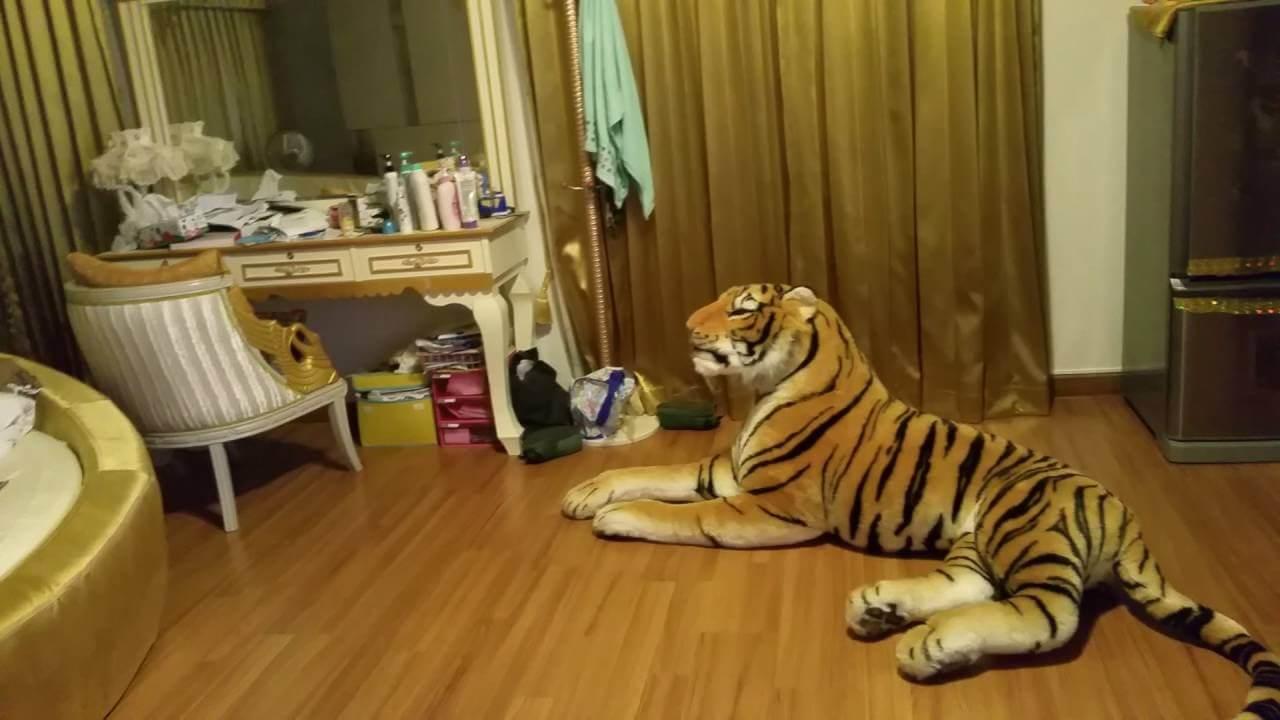 เสืออยู่ในบ้าน